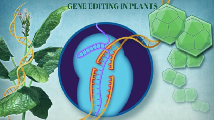 Plants Gene