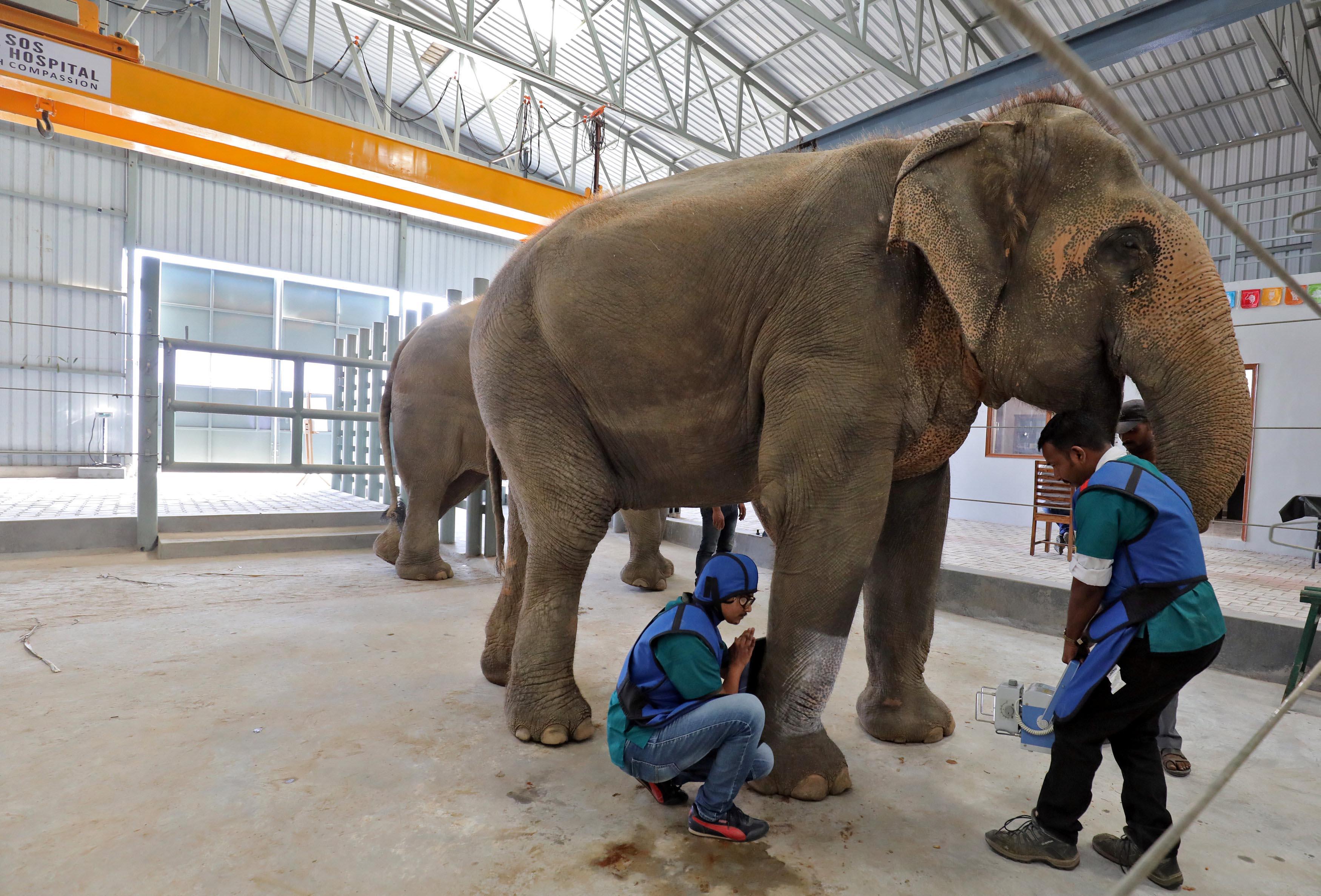hospital for elephants in Mathura