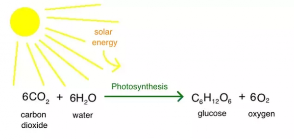 Chemical equation of Photosynthesis