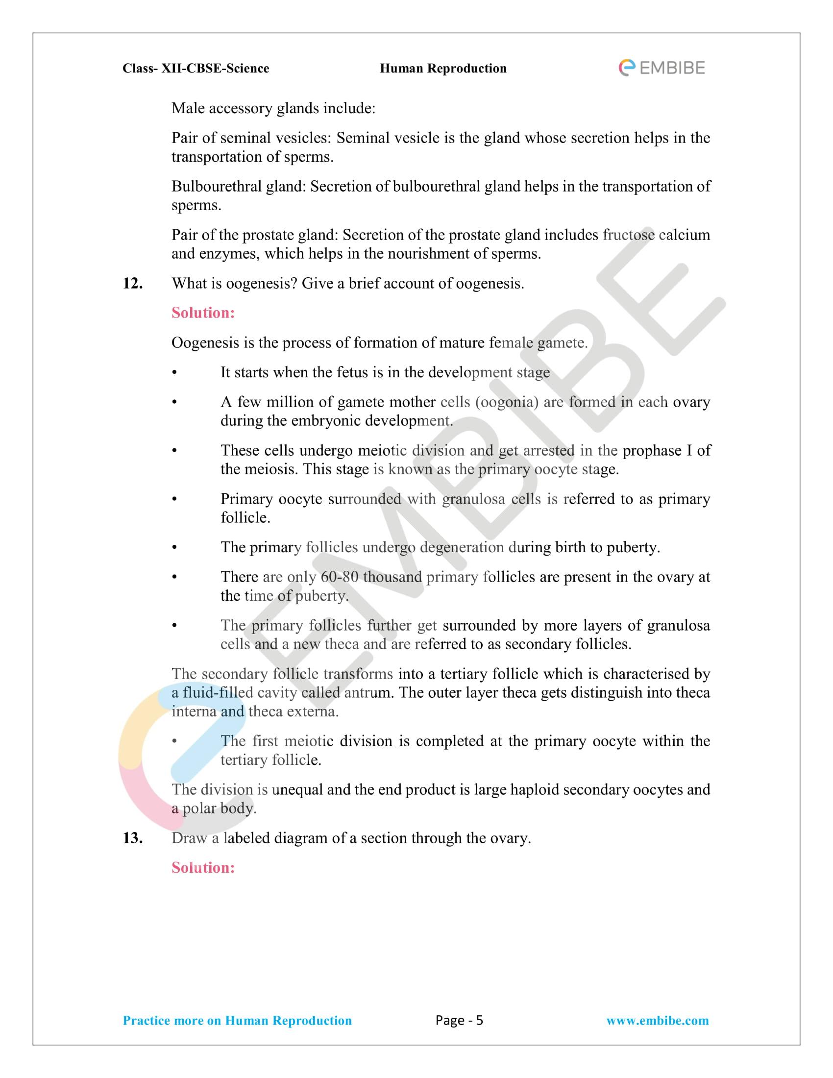 NCERT_Grade12_BOC_Biology_Human Reproduction-5