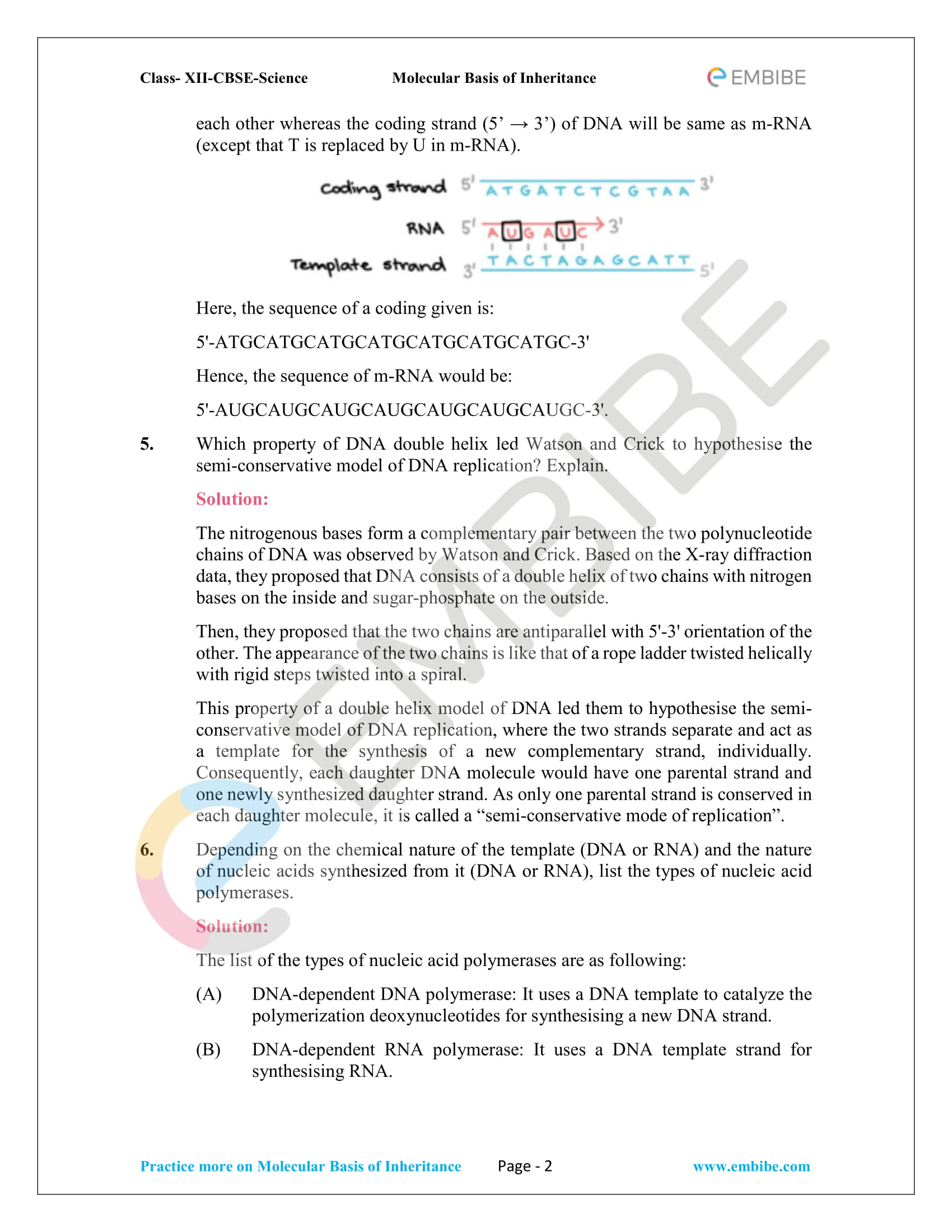 NCERT Solutions for Class 12 Biology Chapter 6: Molecular Basis Of Inheritance - 2