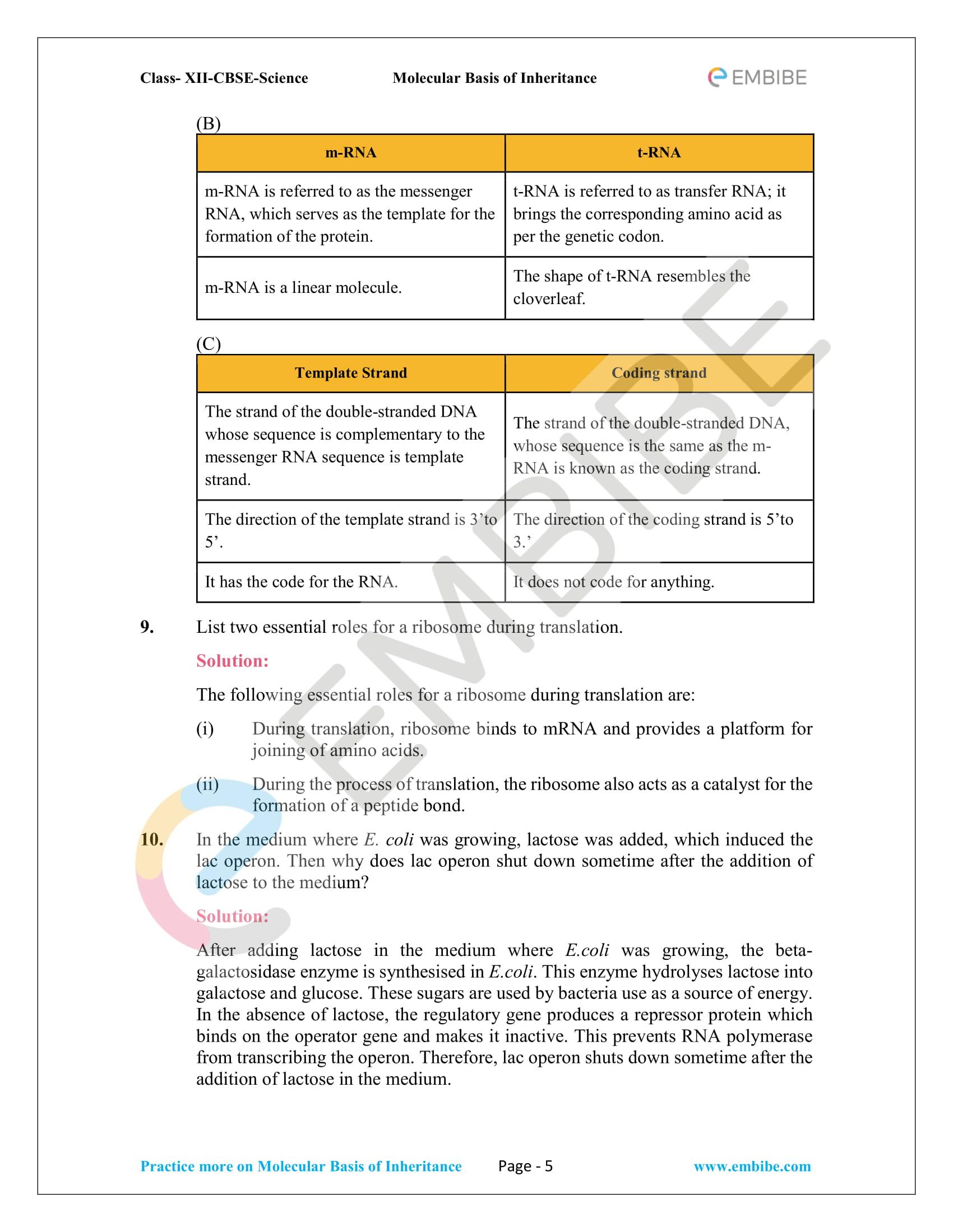 NCERT Solutions for Class 12 Biology Chapter 6: Molecular Basis Of Inheritance - 5