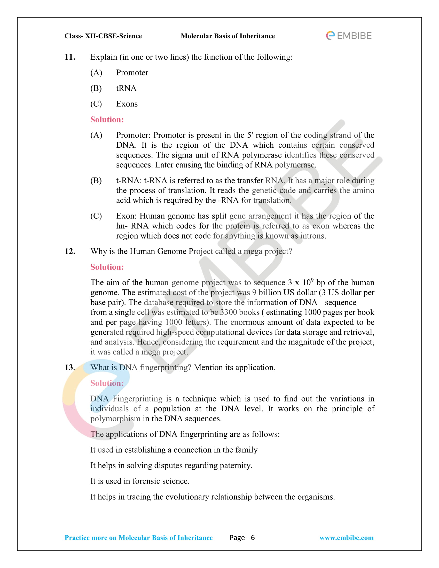 NCERT Solutions for Class 12 Biology Chapter 6: Molecular Basis Of Inheritance - 6