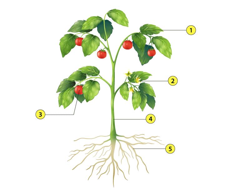 cbse class 2 evs syllabus - naming the plants