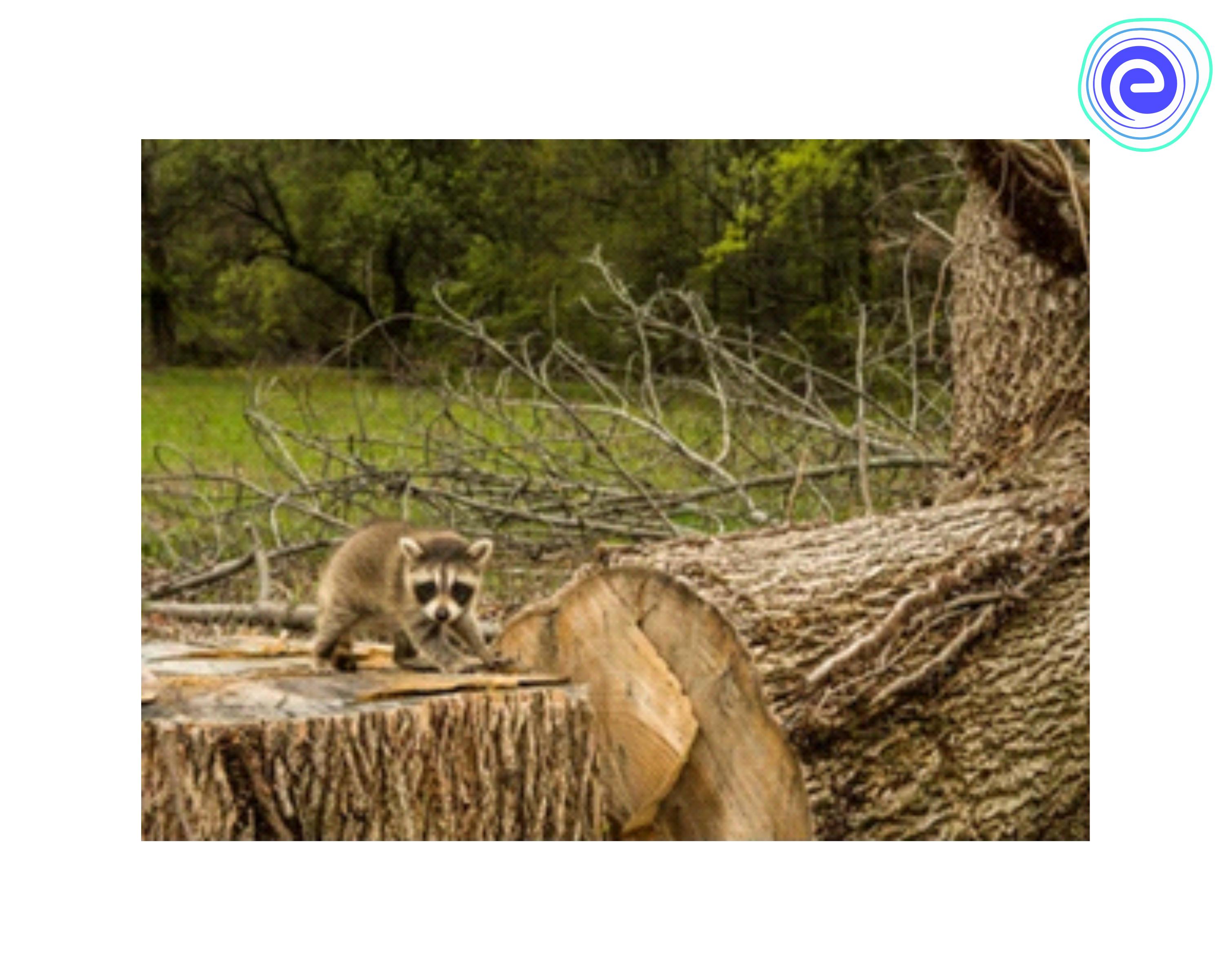 Deforestation Disturb Animal Life In The Forest