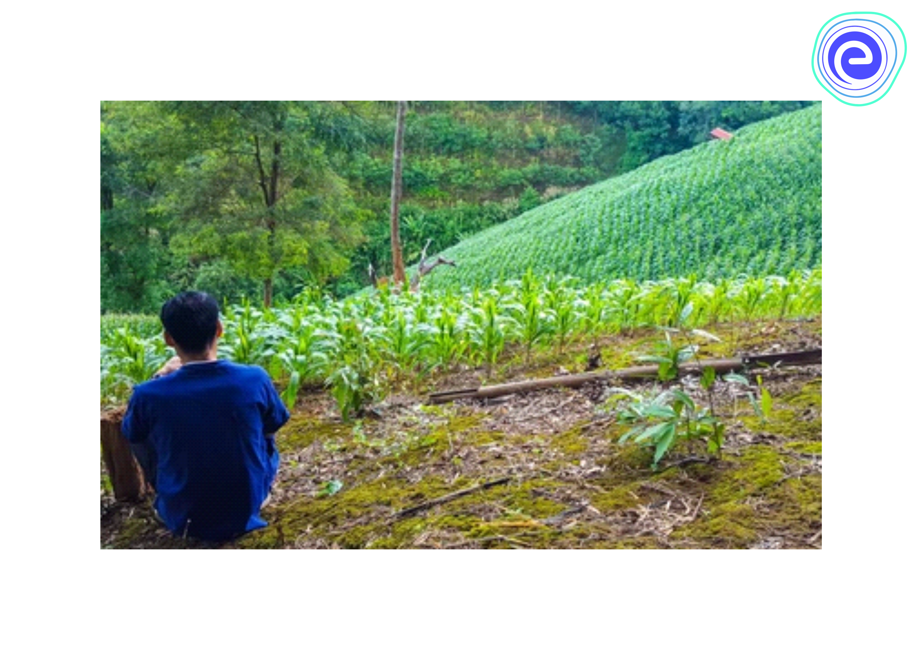 Practice of Shifting Cultivation