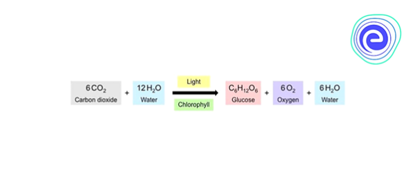 Chemical Reaction of Photosynthesis