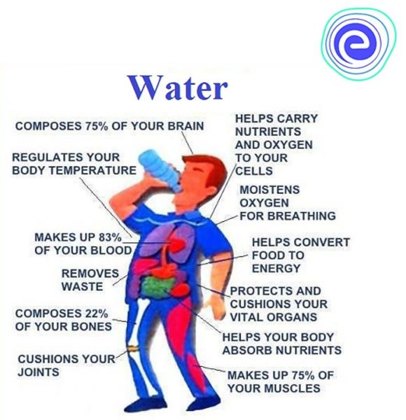 Importance of Water in Humans
