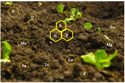 Mineral Riches in Soil