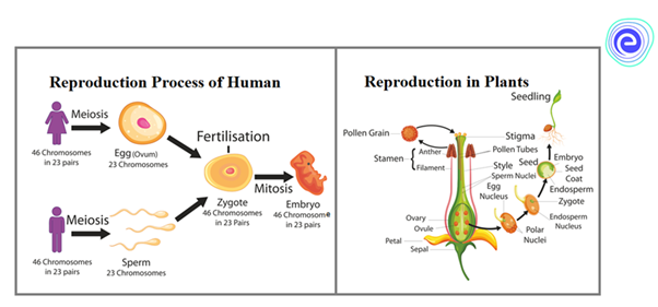 Reproduction in Humans & Plants
