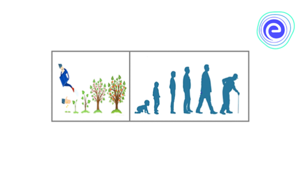 Growth in Plants & Human