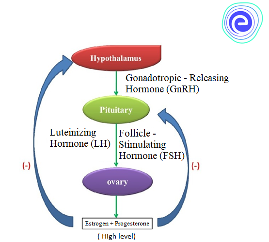 Hormonal Control of Female Reproductive System